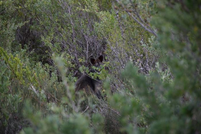 I Spy A Wallaby