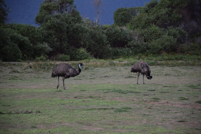 Emu, Is That You?