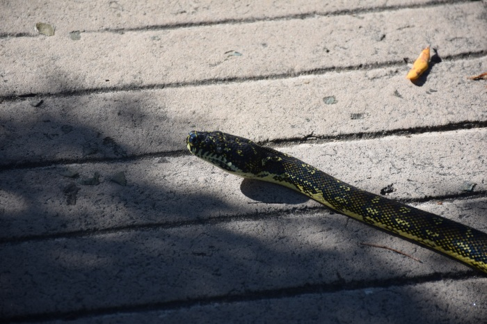 It's just not a hike without a reptile in our path