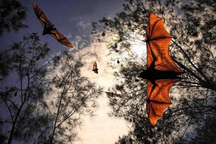 Flying Fox Port Macquarie